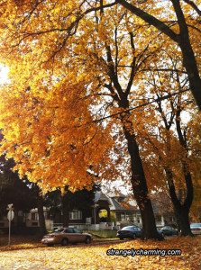 Fall Autumn Equinox - The beautiful colors and changes during this season can bring difficult struggles - strangelycharming.com