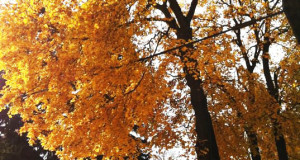 SAD – Seasonal Affective Disorder – Fall Equinox & Daylight Saving Time
