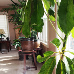 10 Best Houseplants That Clean the Air in Your Home
