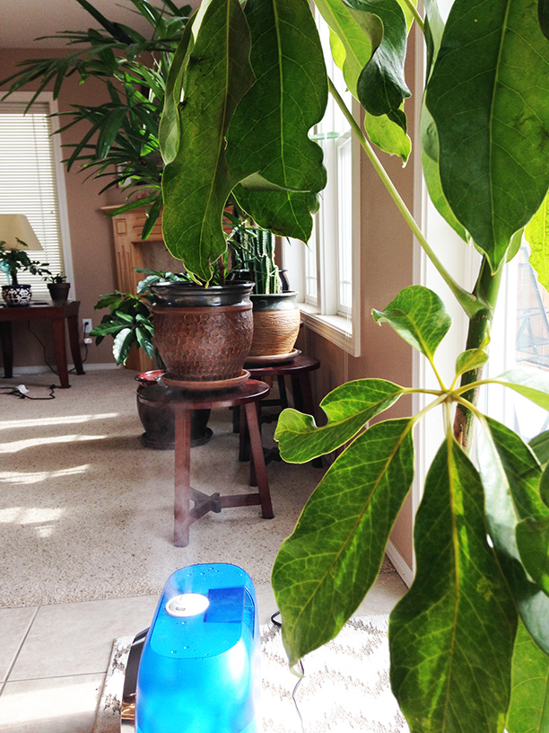 The 10 best houseplants that can clean the air in your home and make it look nicer