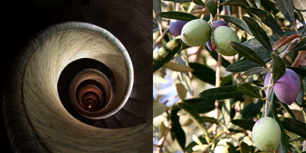 The olive oil rabbit hole is full of complexity and surprises
