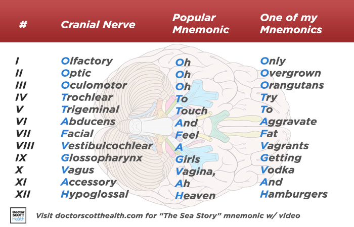 A popular cranial nerves mnemonic and one of my own acronym based mnemonic