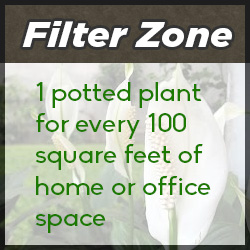 A plant's filter zone is approximately 100 square feet of indoor space per plant